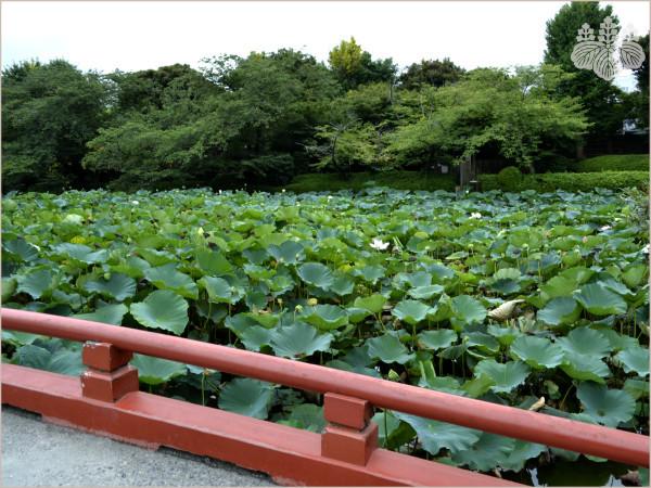 鶴岡八幡宮「源氏池」